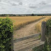 Across the field to the village - Clanfield